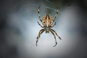 Phobie araignée serpent avion eau